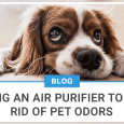 Using An Air Purifier To Get Rid Of Pet Odors