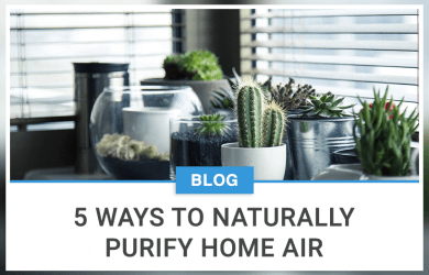 5 Ways To Naturally Purify Home Air