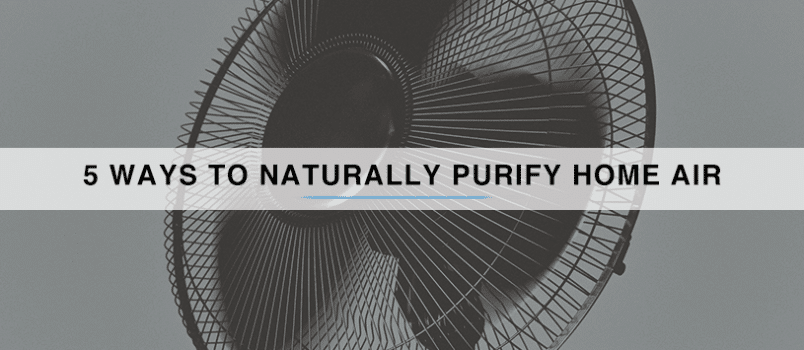 5-Ways-to-Naturally-Purify-Home-Air