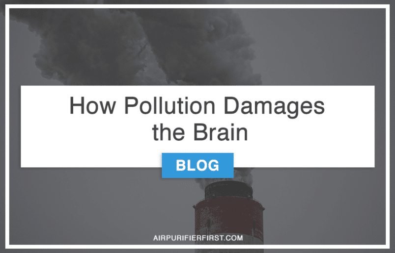 How Pollution Damages the Brain