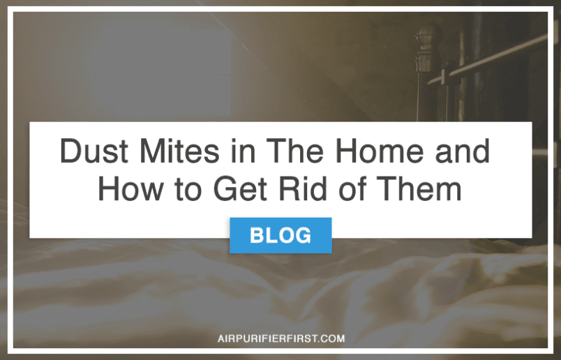 Dust Mites in The Home and How to Get Rid of Them