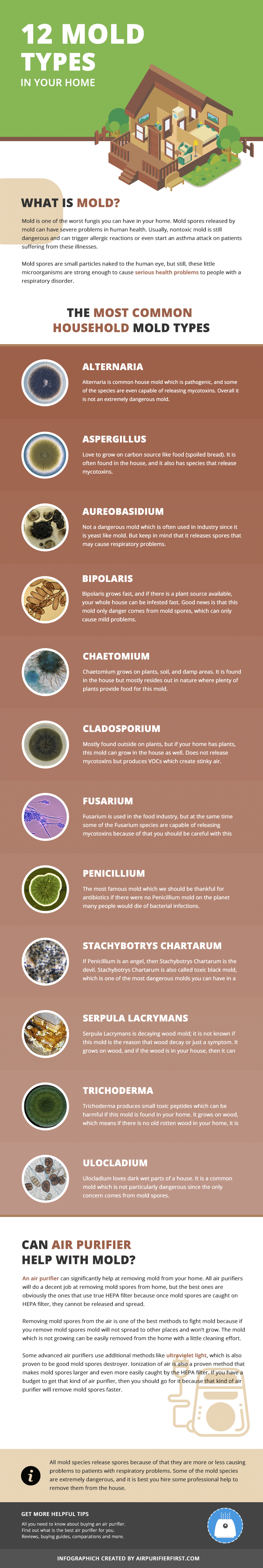 12 Types of Mold Founded in Home Infographic