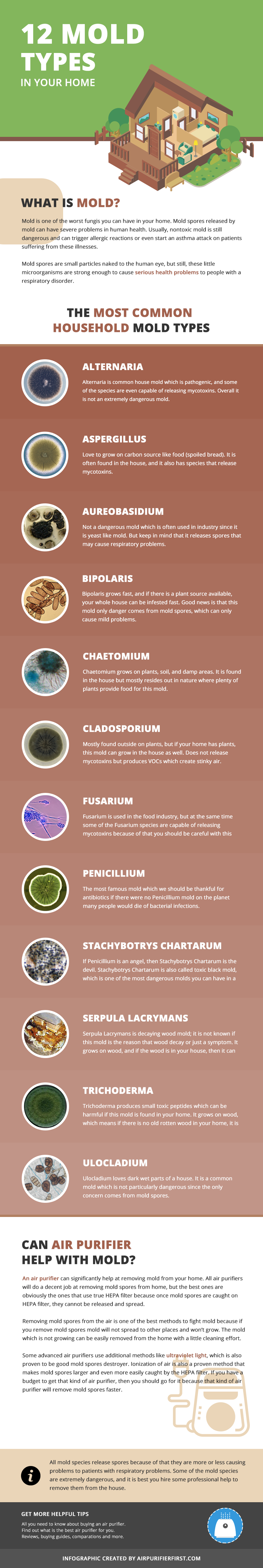 12 Types of Mold Found in Home